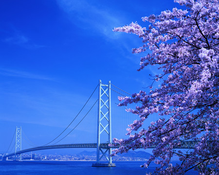 Cherry Blossoms and Akashi Strait Bridge